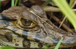 Amazonie – une biodiversité exceptionnelle représentant 60% du territoire péruvien.