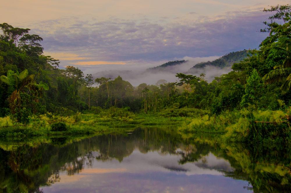 Parc du Manu en Amazonie