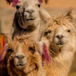 Côte Pacifique et Andes en Famille
