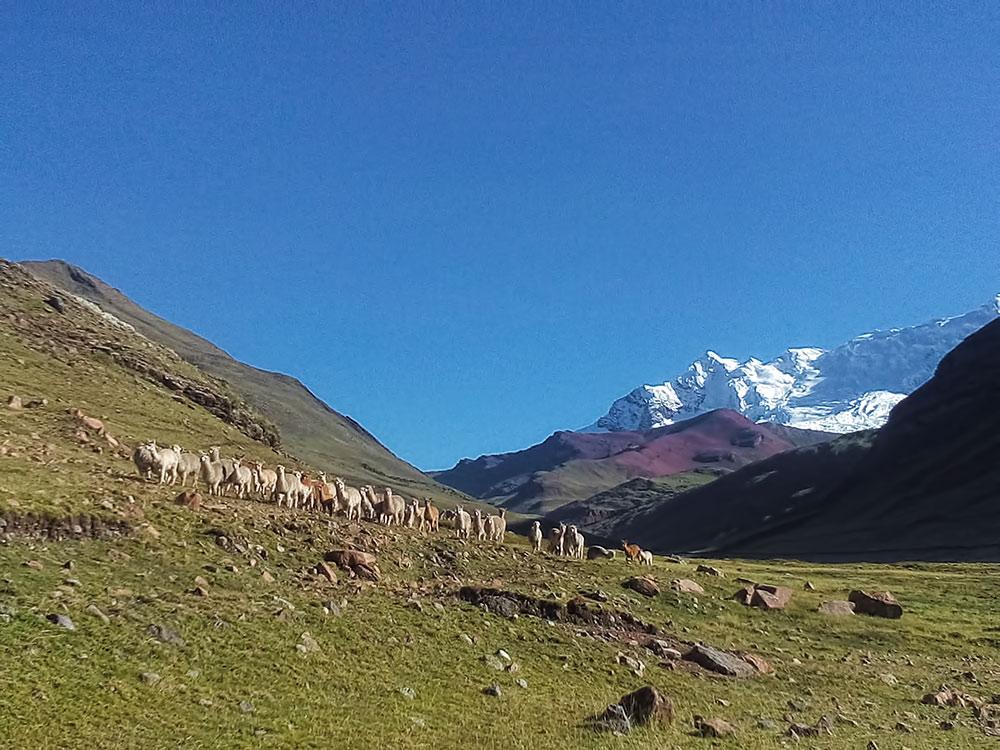 Trek Montagne Arc en Ciel - Rainbow Mountain