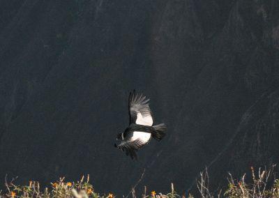 Canyon Colca - Cruz del Condor