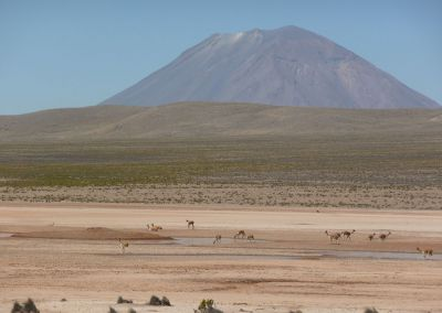 Réserve Nationale des Salinas et Agua Blanca - Volcan Misti
