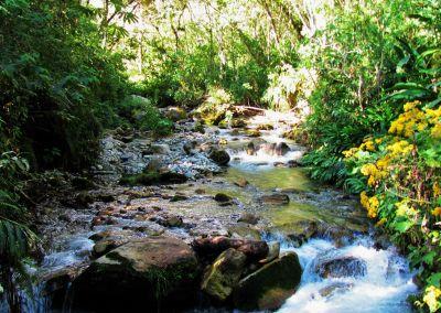 Machu Picchu - Forêt tropicale
